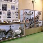 зал животных Удмуртии Сарапульского краеведческого музея