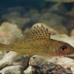 Ерш рыбалка в Удмуртии