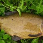 Линь рыбалка в Удмуртии