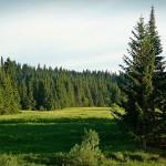 Растительность Удмуртии