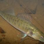 Судак рыбалка в Удмуртии