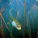 Щука рыбалка в Удмуртии