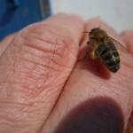 У пчеловодов Удмуртии ответственная пора