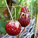 Чем полезны ягоды