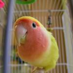 Как обустроить клетку для попугаев