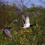 Сроки открытия осенней охоты 2012