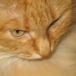 Польза кошки в доме - Мурка
