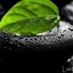 Как сохранить здоровье в современных условиях жизни
