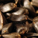Насколько полезно грызть семечки