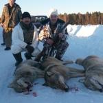 На охоте на волка в п. Игра