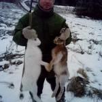 Охота на зайцев в Удмуртии Сарапульский район