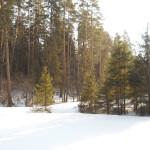 Сарапульский лес