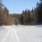 зимняя поляна в Сарапульском лесу