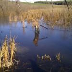 охота на уток Оленье Болото Сарапульский район