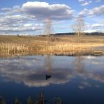 охота на селезня весной д.Петровка