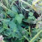 паутина на траве