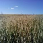 поле село Шадрино