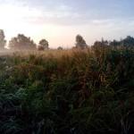 роса и туман на восходе солнца