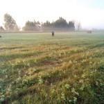 утром с охоты