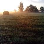 утром в поле