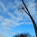 валериана на фоне голубого неба