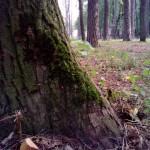 зеленый мох детский парк Сарапул