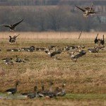 Открытие весенней охоты 2013 в Удмуртии