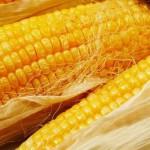 Кукуруза: в чем ее польза