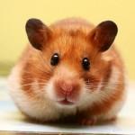 Польза и вред от разных домашних животных