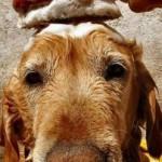 Как мыть домашних животных