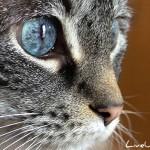 Мир глазами кошек