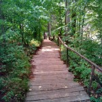 дорога к роднику в заповеднике Лудорвай