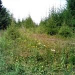 лесные травы в заповеднике Лудорвай