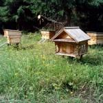 пчелинные ульи на пасеке в Лудорвае