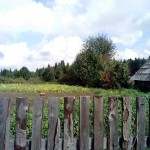старая рябина в огороде село Карсовай
