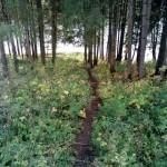 тропинка к Карсовайскому пруду
