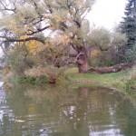 дерево желаний река Варзинка санаторий Варзи Ятчи