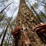 Дендротерапия - как лечиться деревьями