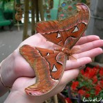 Выставка новой коллекции картин «Картины из крыльев бабочек»