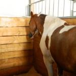 экскурсия в закулисную часть ижевского цирка беговые лошади