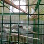 экскурсия в закулисную часть ижевского цирка голуби