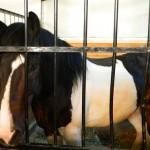 экскурсия в закулисную часть ижевского цирка конюшня
