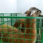 экскурсия в закулисную часть ижевского цирка лама