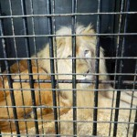 экскурсия в закулисную часть ижевского цирка лев