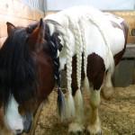 экскурсия в закулисную часть ижевского цирка лошадь с косичками