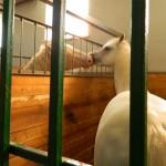 экскурсия в закулисную часть ижевского цирка лошади целуются
