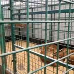 экскурсия в закулисную часть ижевского цирка львицы