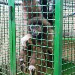 экскурсия в закулисную часть ижевского цирка обезьяны