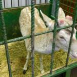 экскурсия в закулисную часть ижевского цирка олень