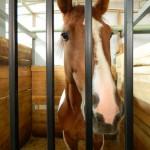 экскурсия в закулисную часть ижевского цирка породистые лошади